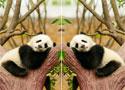 Animal Differences találd meg a különbségeket